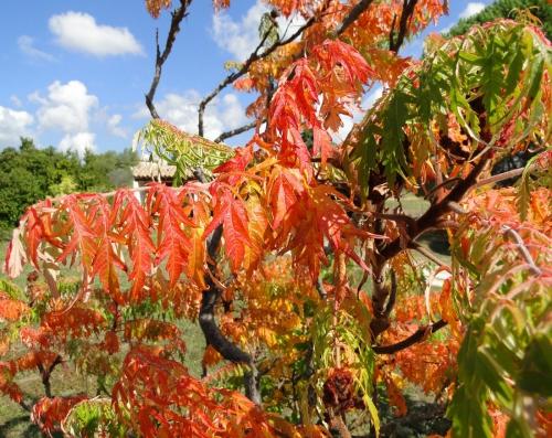 automne, rouge,couleurs,