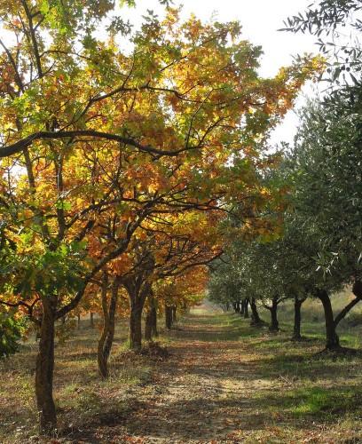 chênes, oliviers,