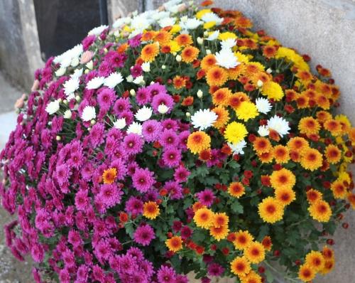 fleurs,Toussaint,beauté,