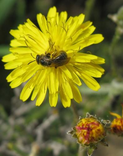 fleur,insecte,printemps,2011
